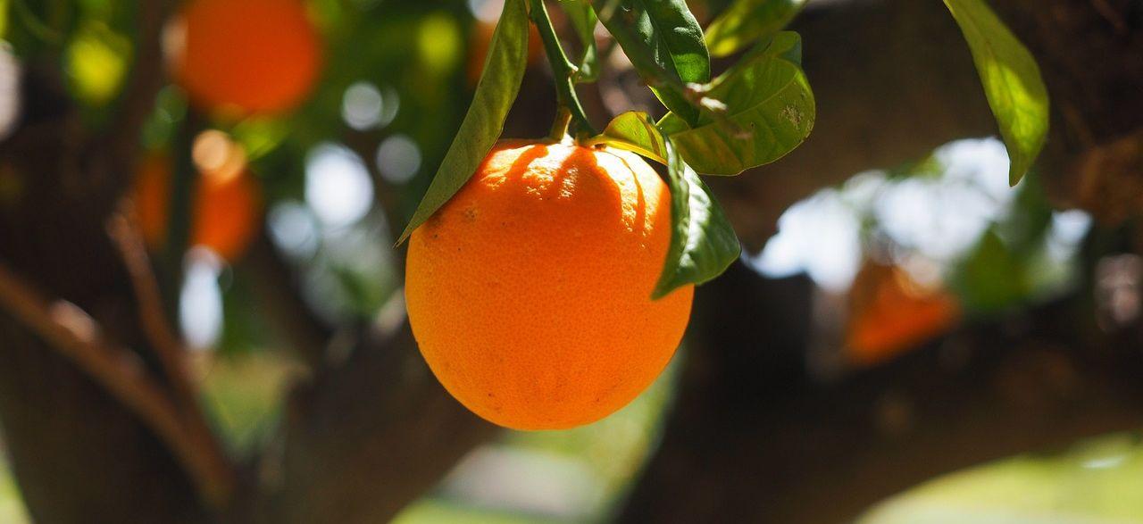 Vitamin C ist ein